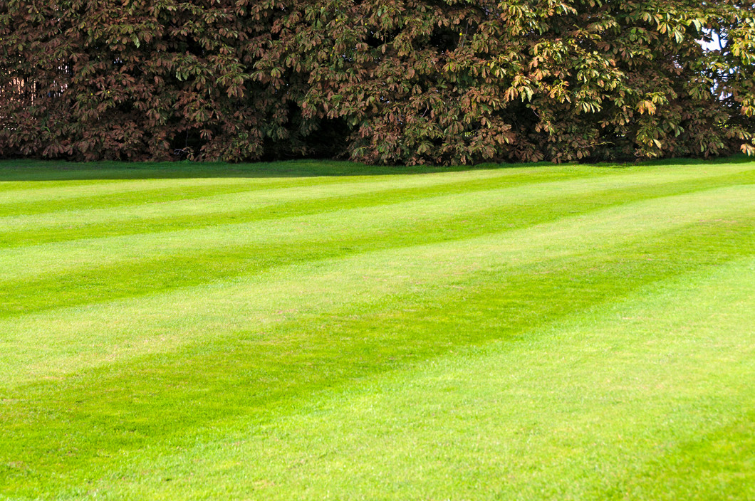Lawn Care Pictures Free Free Estimates on Lawn Care